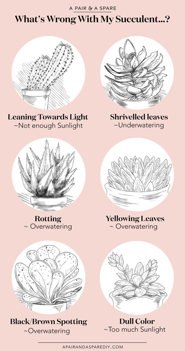 how-to-save-your-dying-succulent-plants-in-3-days