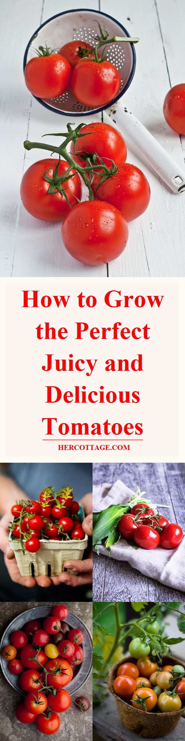 how-to-grow-the-perfect-juicy-and-delicious-tomatoes
