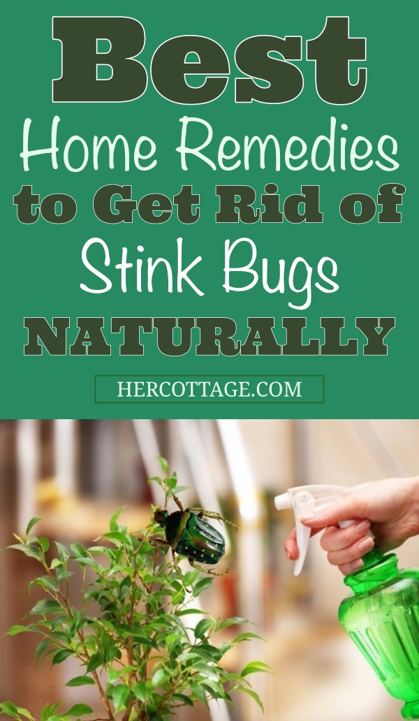 Best-Home-Remedies-to-Get-Rid-of-Stink-Bugs-Naturally