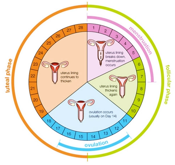 How-to-Know-You-are-Ovulating-7-Signs-of-Ovulation