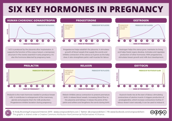 The Guide to Understanding Hormones in Pregnancy and their Roles
