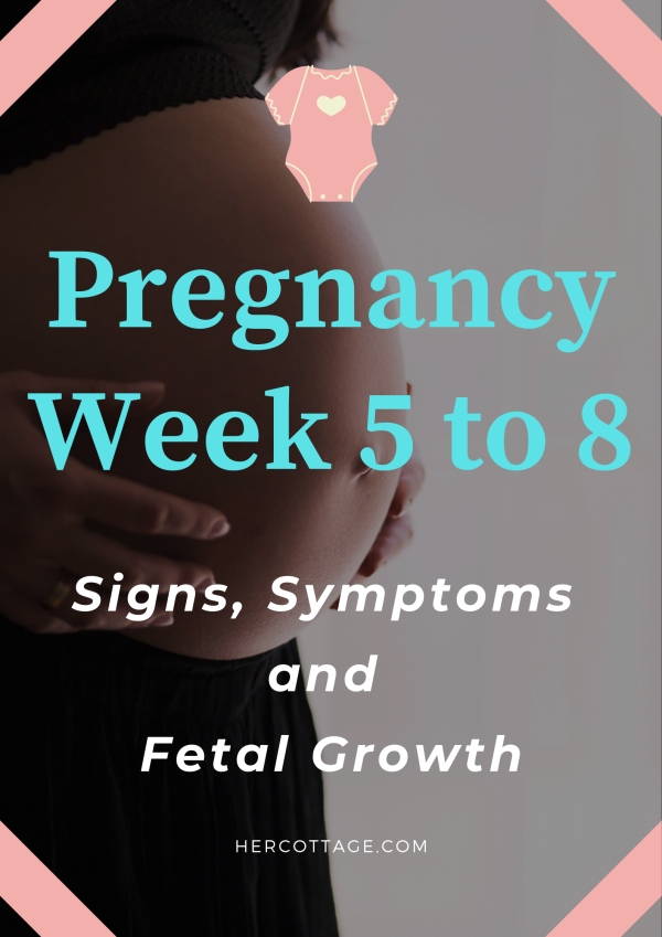 Pregnancy-Week-5-to-8-Signs-Symptoms-and-Fetal-Growth